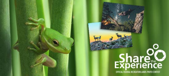 share the experience photo contest winner tree frog