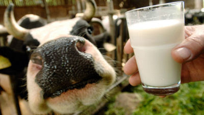 How To Handle Raw Milk … And Even Make It Last Longer Raw-milk--400x226