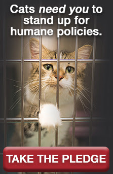 Cats need you to stand up for humane policies. Take the pledge.
