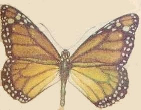 mariposa007