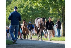 Youngsters on parade at the Keeneland September Yearling Sale