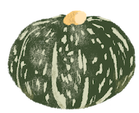 Sustainable Winter Squash
