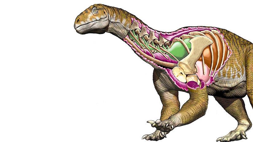 Un fósil hallado en Argentina cambia la historia de los dinosaurios gigantes