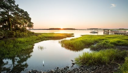 Discover a Perfect Paradox in the South Carolina Lowcountry image