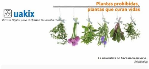 uakix mayo 2012 - Plantas prohibidas que incomodan a las farmaceuticas