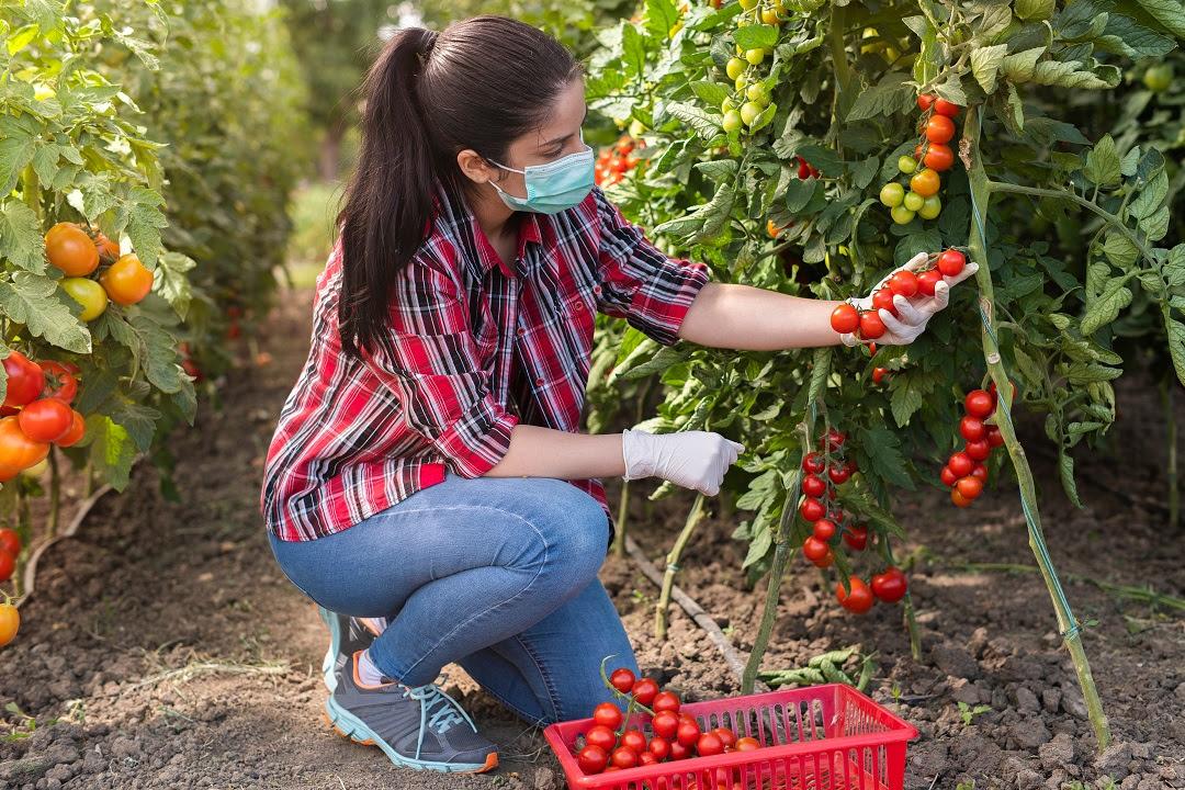 agricoltura aziende giovani