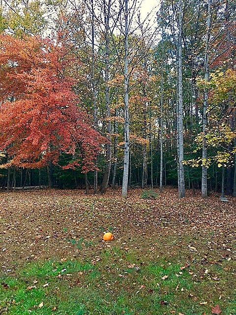 http://www.damau.org/wp-content/uploads/2016/11/Pumpkin-on-back-lawn1.jpg