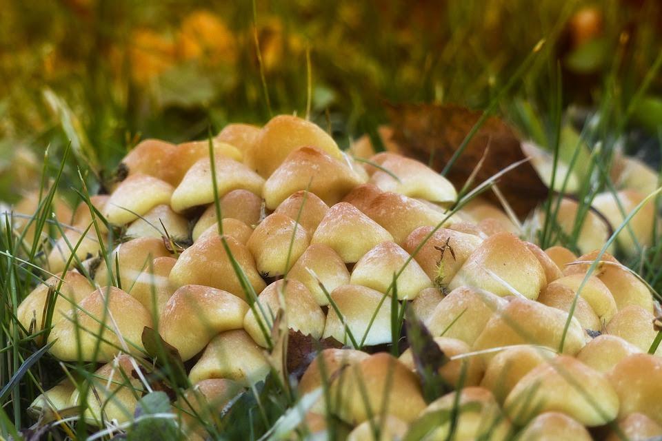 Selvagem, Cogumelos, Cluster, Natureza, Planta, Tóxico