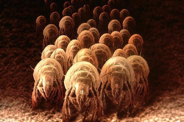 Nhìn giường sạch đẹp vậy thôi nhưng hàng triệu sinh vật này đang ngủ cùng bạn mỗi đêm - Ảnh 2.
