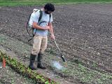 Man using backpack flame weeder to burn weeds in farm field