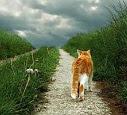 Stoppons la reproduction, l'abandon, la mise à mort des chats domestiques et errants en Suisse !
