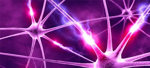 neuronas-electricas