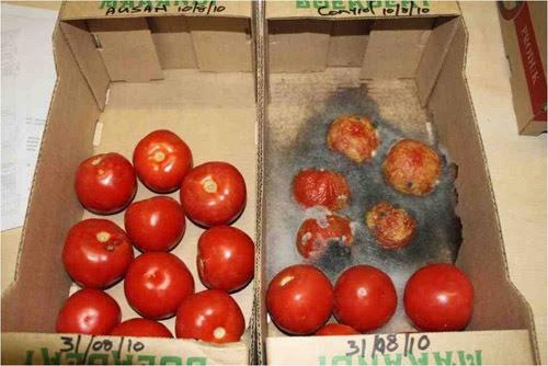 bảo quản, thực phẩm, chất bảo quản, có hại, độc hại, 2,4 D, dioxin, hoa quả