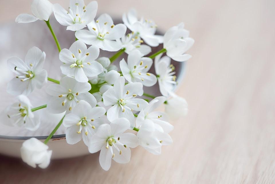 Image result for Witte bloemen/Foto's