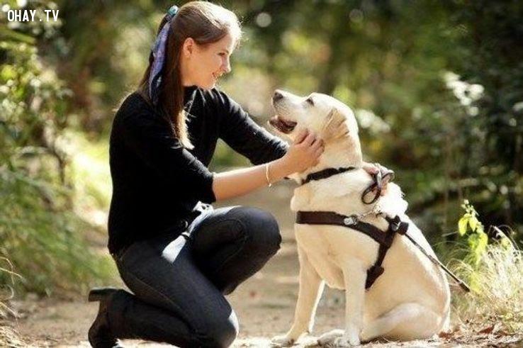Bạn có thể bị bỏ tù vì trêu chọc một chú chó