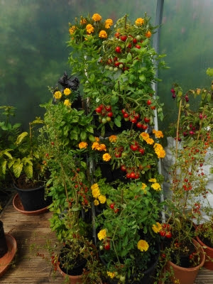 Tomato & herb stepladder garden