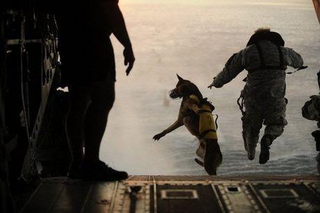 Chó nghiệp vụ của đặc nhiệm SEAL được luyện thế nào?