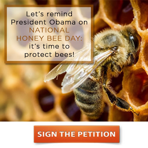 protect the bees We believe this serious issue affects everyone after all, farmers can't grow the crops we need if we don't protect the bees that pollinate them.