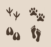 Footprints of a chicken, dog, horse and human