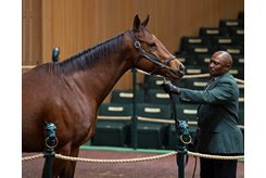 Callback in the ring at the Keeneland November Sale