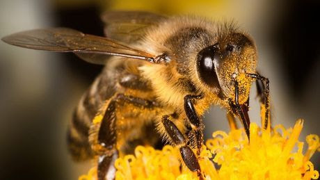 abeille-illustration 70880 w460