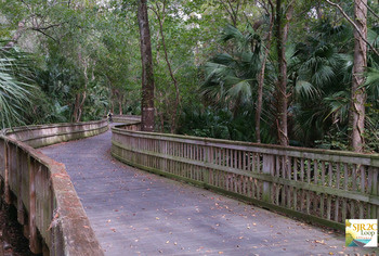 St. Johns River to Sea Loop by Maggie Ardito
