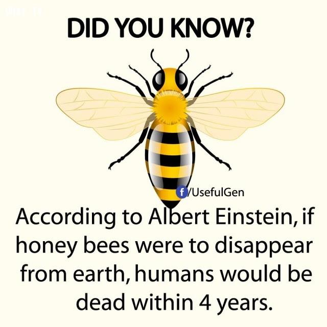 9. Theo Albert Einstein, nếu ong mật biến mất khỏi trái đất, loài người sẽ chết trong vòng 4 năm.,sự thật thú vị,sự thật đáng kinh ngạc,những điều thú vị trong cuộc sống,có thể bạn chưa biết