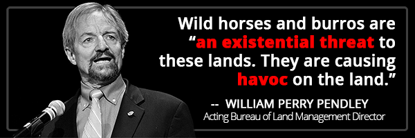 "Wild horses and burros are ""an existential threat to these lands. They are causing havoc on the land."" --  William Perry Pendley"