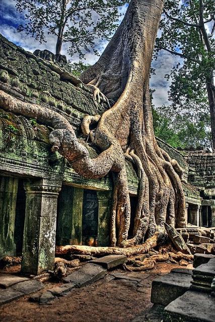 trees, Angkor-Wat