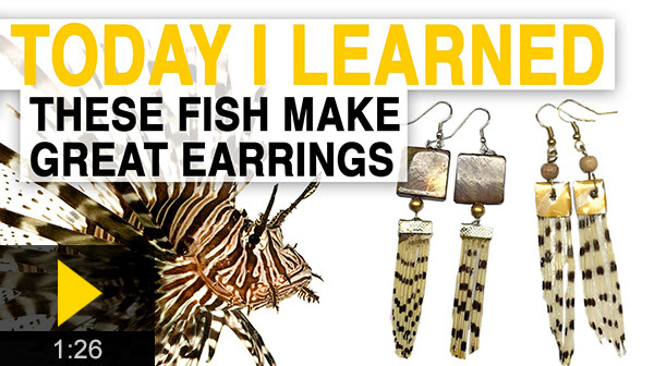 Today I Learned These Fish Make Great Earrings