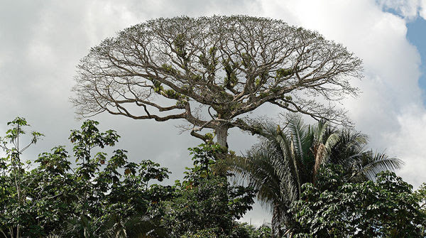 Yasuni, Ecuador