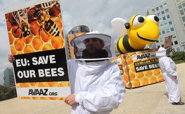 European_bees_find_pesticide_relief_rsz.jpg