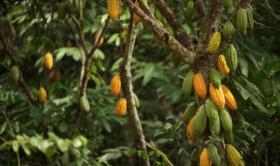 Plantation-Pérou-1011x600.png