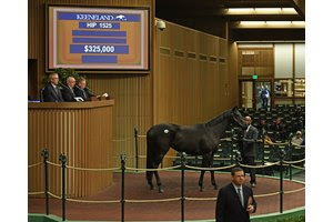 Lark Rise in the ring during the Keeneland November Sale