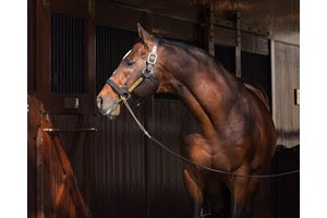 Into Mischief at Spendthrift Farm