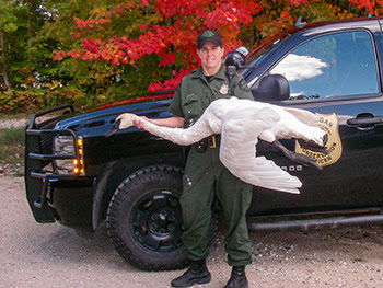 Michigan Conservation Officer Andrea Erratt is pictured with a dead trumpeter swan confiscated by officers.