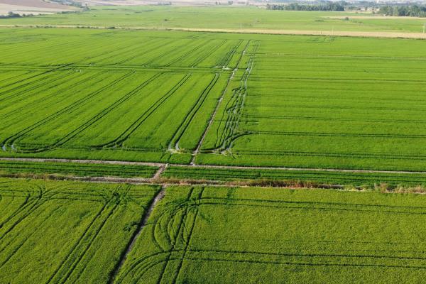 Yemyeşil çeltik tarlalarının drone ile çekilmiş fotoğrafı.