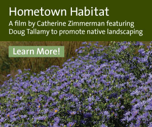 Hometown Habitat...The Meadow Project