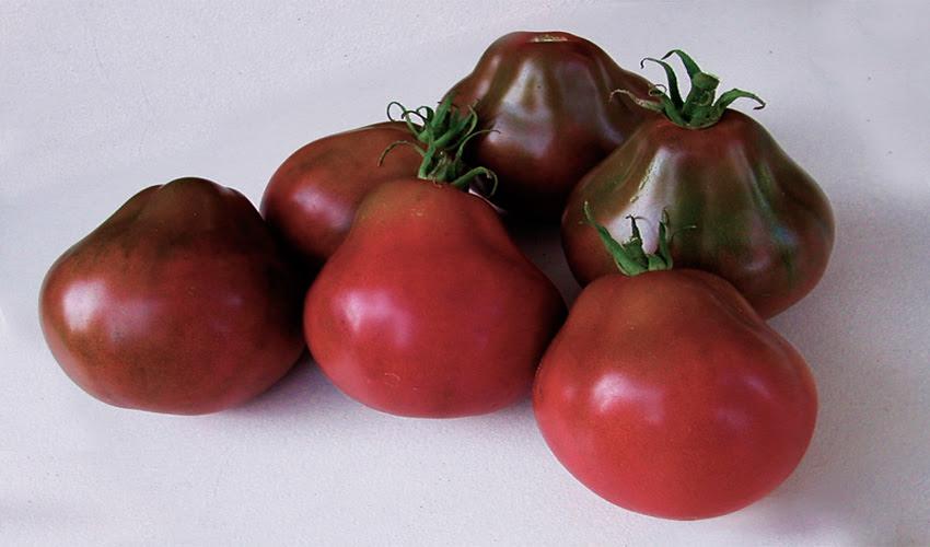 Tomato Japanesseblacktrifele