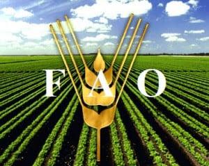 El presidente Maduro, ratificó que asistirá el próximo mes de junio a Roma, Italia, para recibir en nombre del Gobierno Revolucionario un reconocimiento de la FAO como ejemplo en el mundo en la lucha contra el hambre.