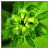 green-leaves-sm.jpg