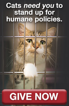 Cats need you to stand up for humane policies. Give Now.