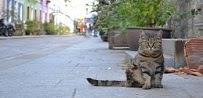 Mise en fourrière des chats de Cotignac !