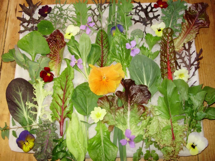 'Equinox Celebration Salad'  34 different leaves plus edible flowers all picked from the polytunnel