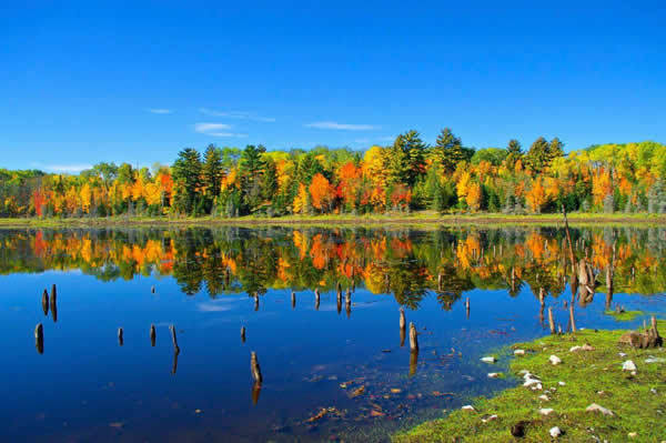 Fall color at Voyageurs National Park