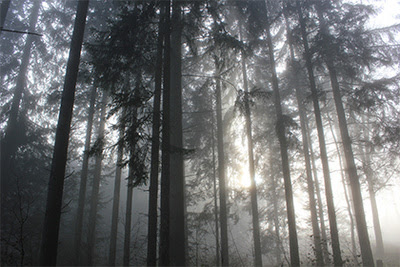 forest0001_400