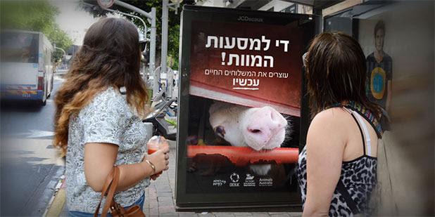 http://www.animalsaustralia.org/investigations/live-export/