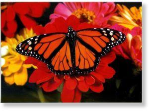 notecard_monarch_butterfly.jpg