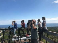 Hawk Ridge Hawkwatchers