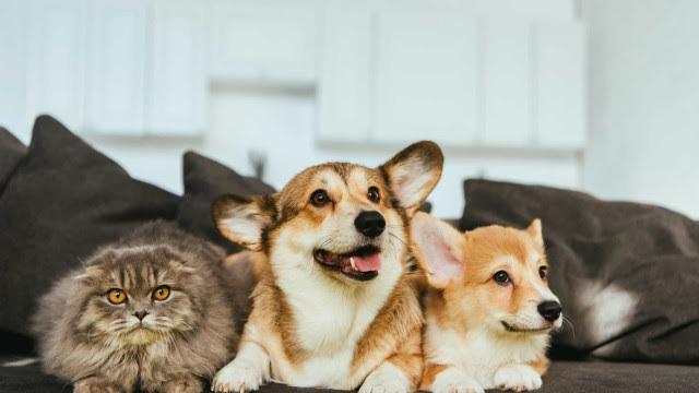 Cientistas alertam: Animais podem necessitar de vacinação contra a Covid